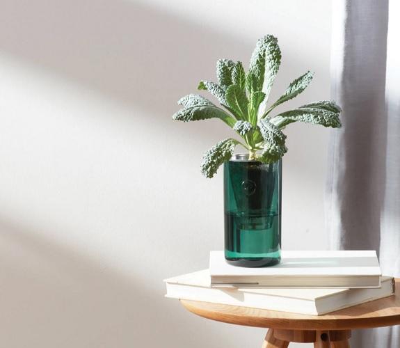 Kit de culture hydroponique Sprout Baby Kale moderne