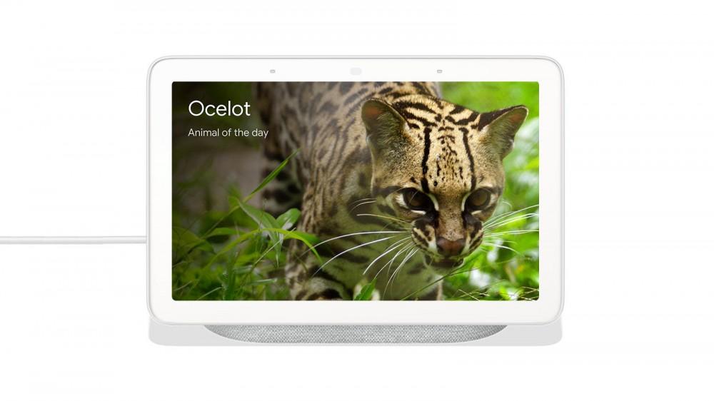 Un Nest Hub avec un Oceleot à l'écran.