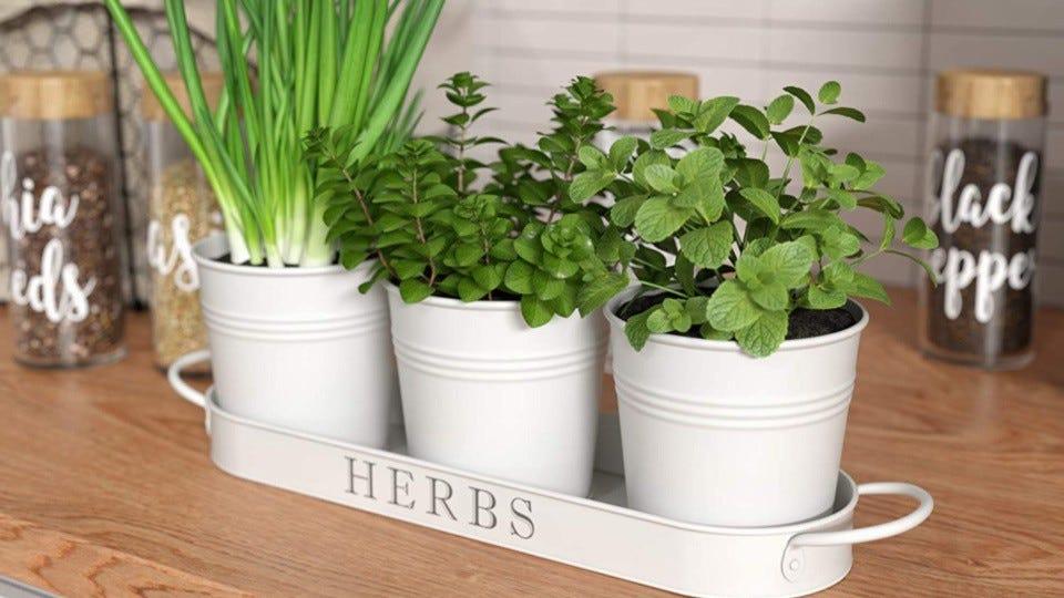 Un planteur d'herbes par Barnyard Designs, placé directement sur le comptoir avec des herbes fraîches en pleine floraison.