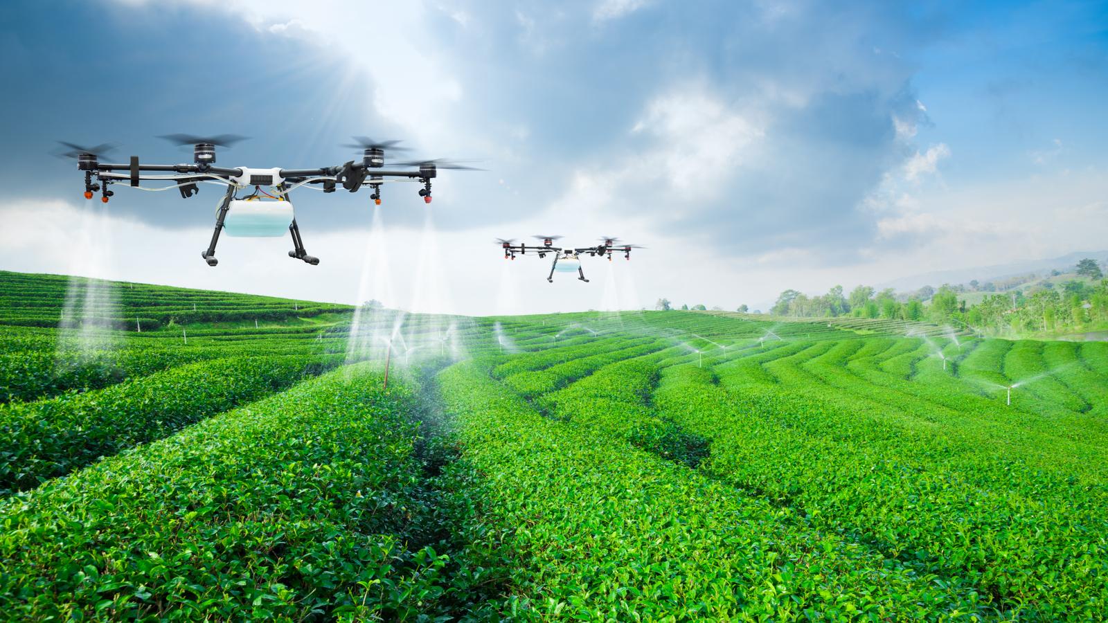 Des drones agricoles volent et pulvérisent des cultures sur un champ